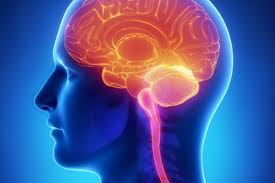 neurocoaching curso online