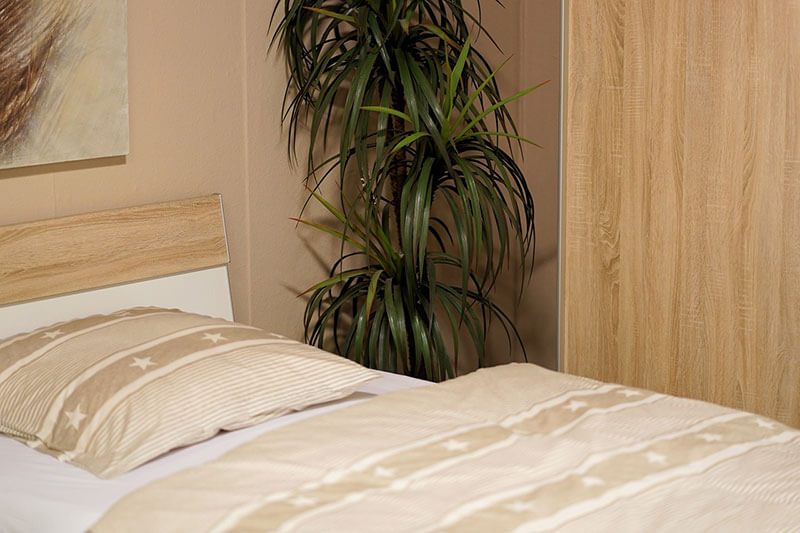 Le piante in camera da letto per favorire il sonno u cuscini bio