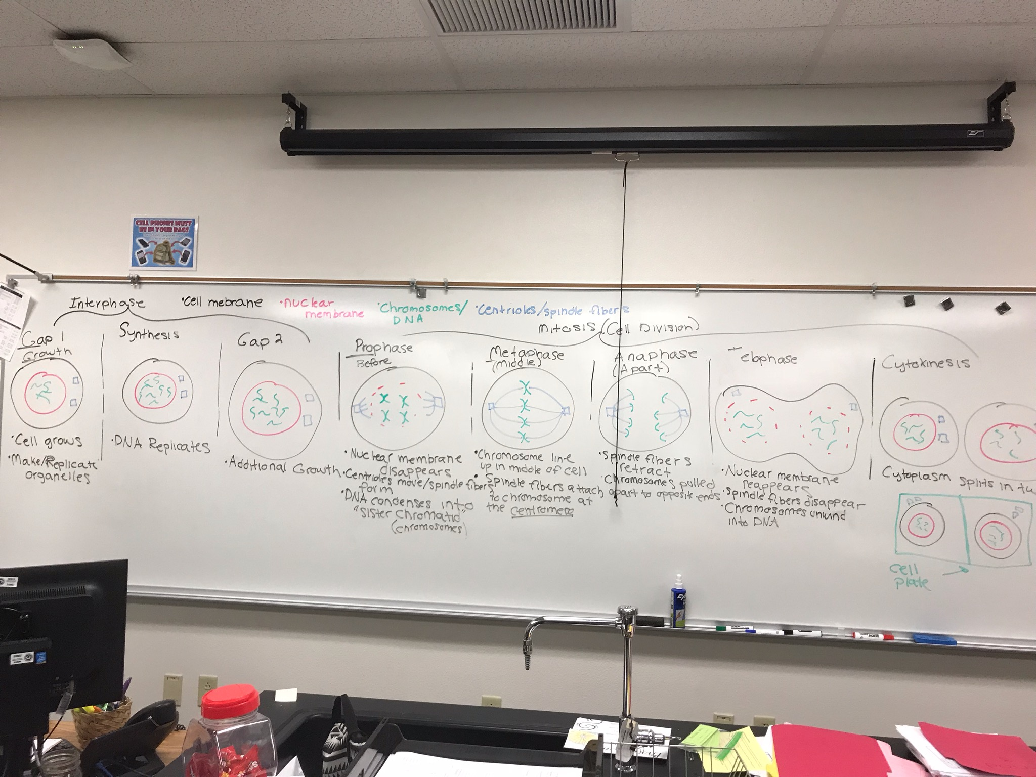 Blakesley Jordan Biology Assignments And Notes