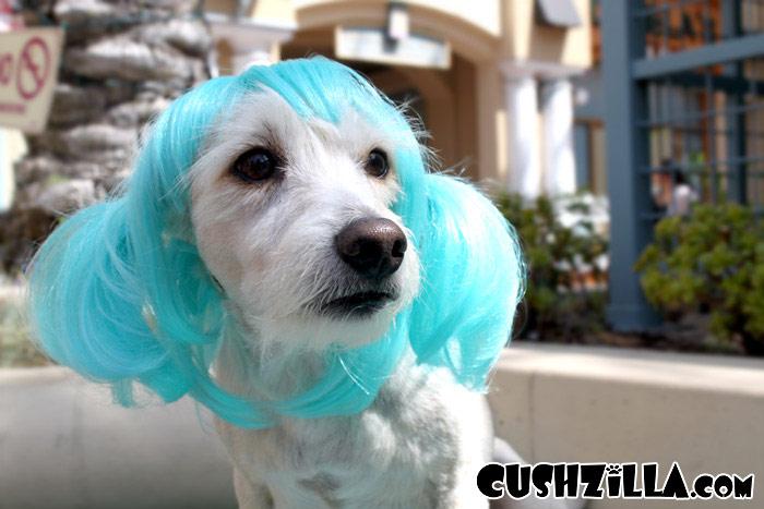 Cat Wig Dog Wig Cushzilla Aqua Anime Pet Wig