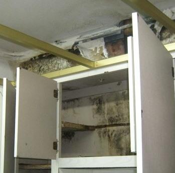 Moldy Kitchen Cabinets