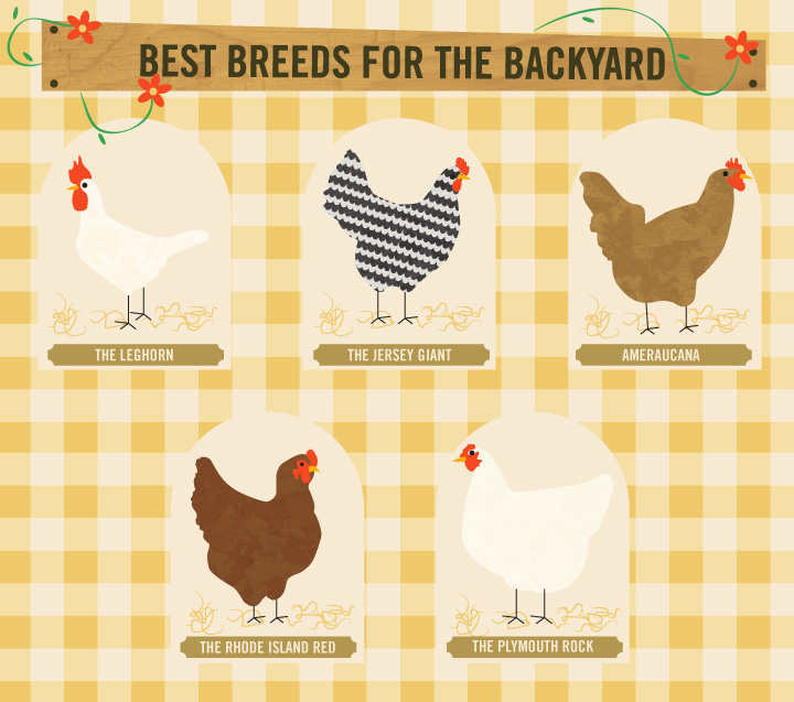 Best Breeds For The Backyard