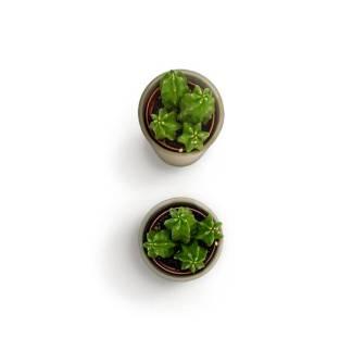 item-cover-small-cactus-2