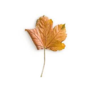 item-cover-maple-1-leaf-2
