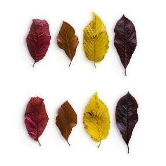 item-cover-mix-leaves-pack-2