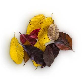 item-cover-mix-leaves-pack-pile