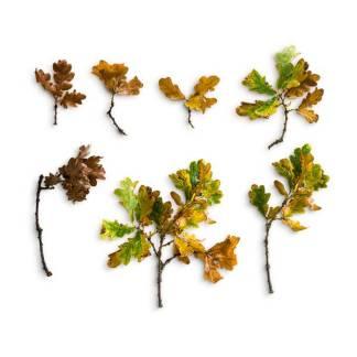 item-cover-oak-sticks-leaves-pack