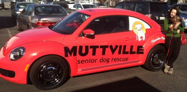 muttville car wrap-09