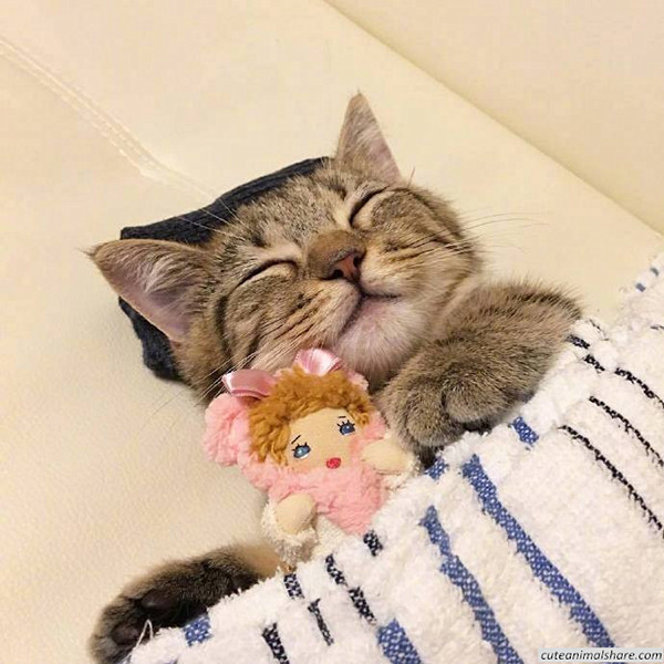 Image result for cute kitten photos