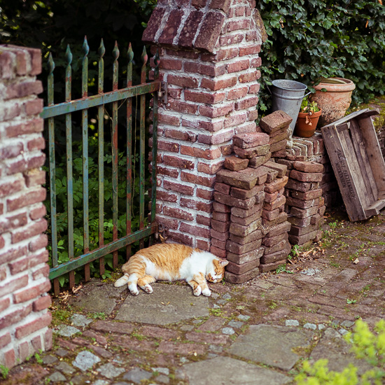 Die Rote Katze versucht einen Schattenplatz zu bekommen