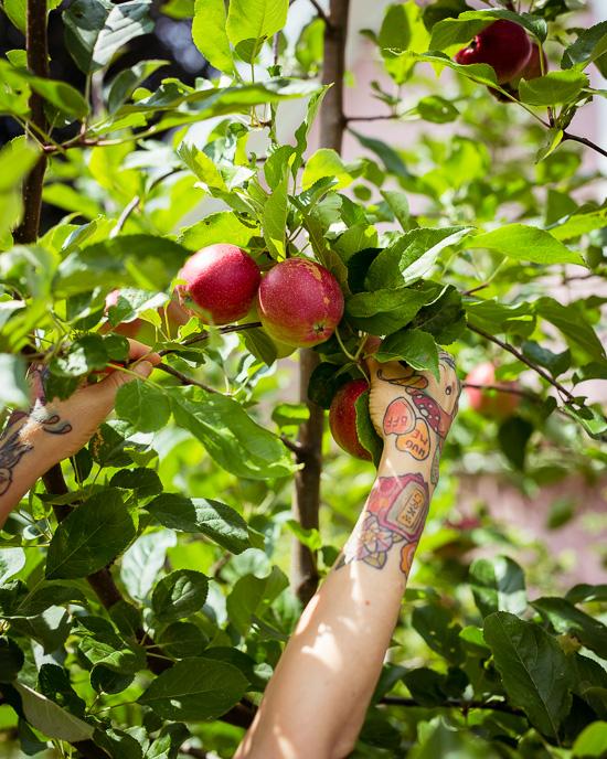 Die Apfelernte 2020 ist Top