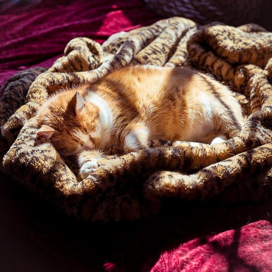 Die Rote Katze hat sich einen Sonnen Schlafplatz ausgesucht