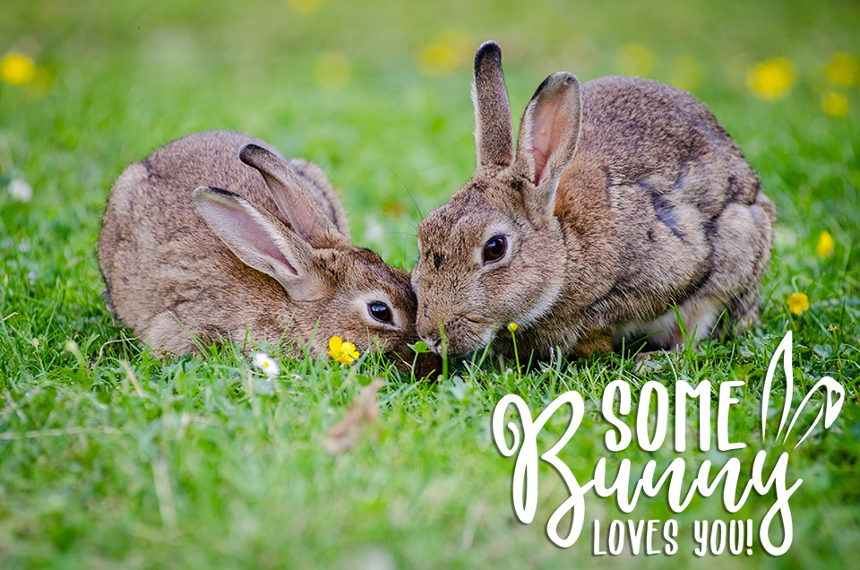 Some Bunny Loves You White Transparent Overlay