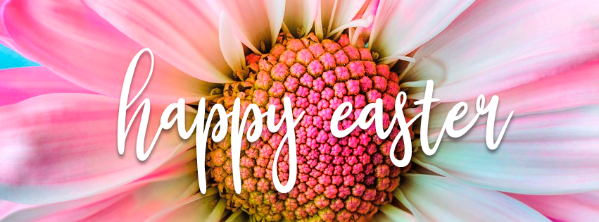 Easter Daisy Cover Photo