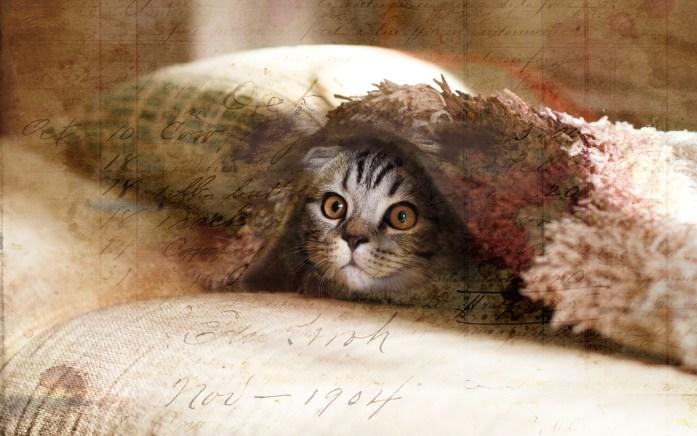 peek a boo after kitty