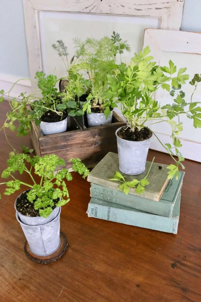 DIY pressed plants and herbs