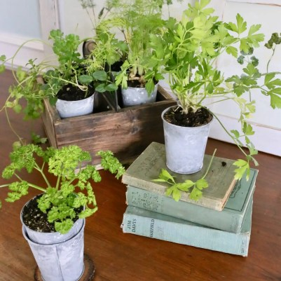 DIY pressed plants and herbs