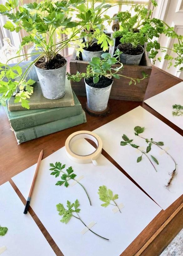 DIY pressed plants 2