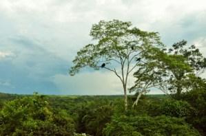 Cuyabeno, Amazon, Ecuador, Tour, tours, South Amarica