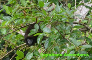 Cuyabeno, jungle, tour, Ecuador