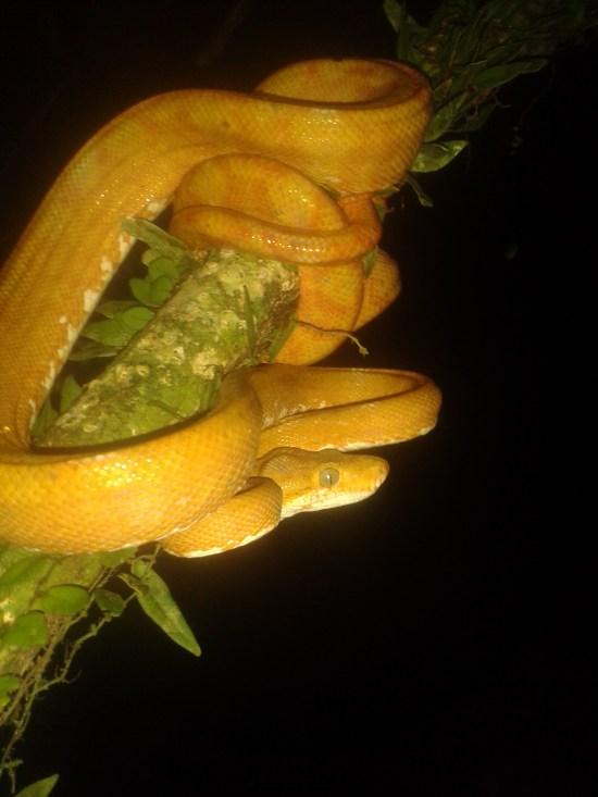 rain forest Ecuador Amazon Tours