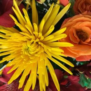 fall, flowers, florist, sale