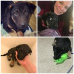 Cleo Diaries (Diaries of a Foster Dog)