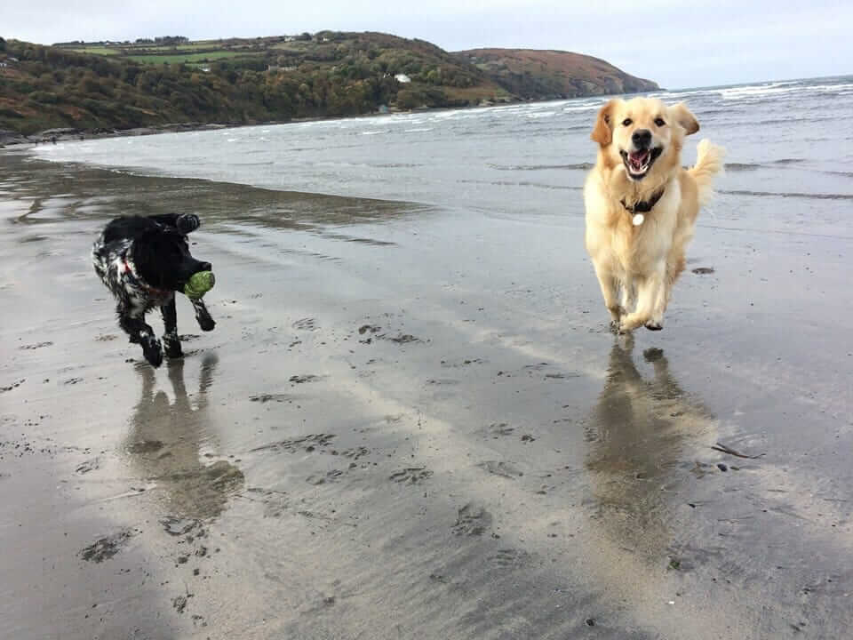 dog friendly holiday cottages in Pembrokeshire