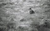 eine analog fotografierte Katze im Feld