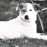 ein analog fotografierter Hund im Gras