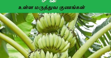 banana tree uses in tamil