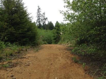 More hardpack clay logging roads.