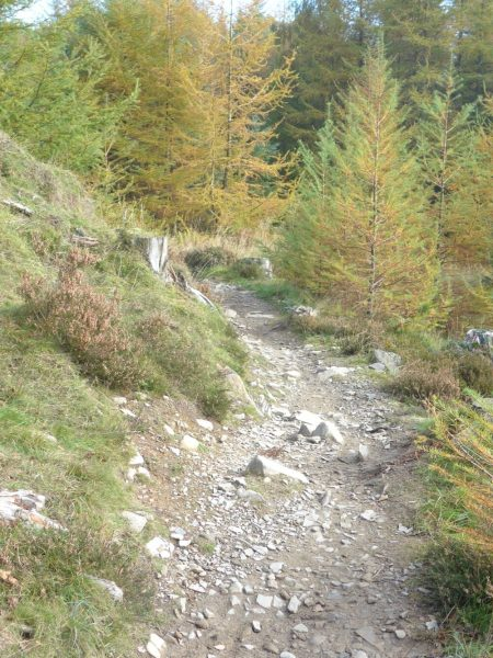 The Altura Red route at Grizedale Forest, Cumbria
