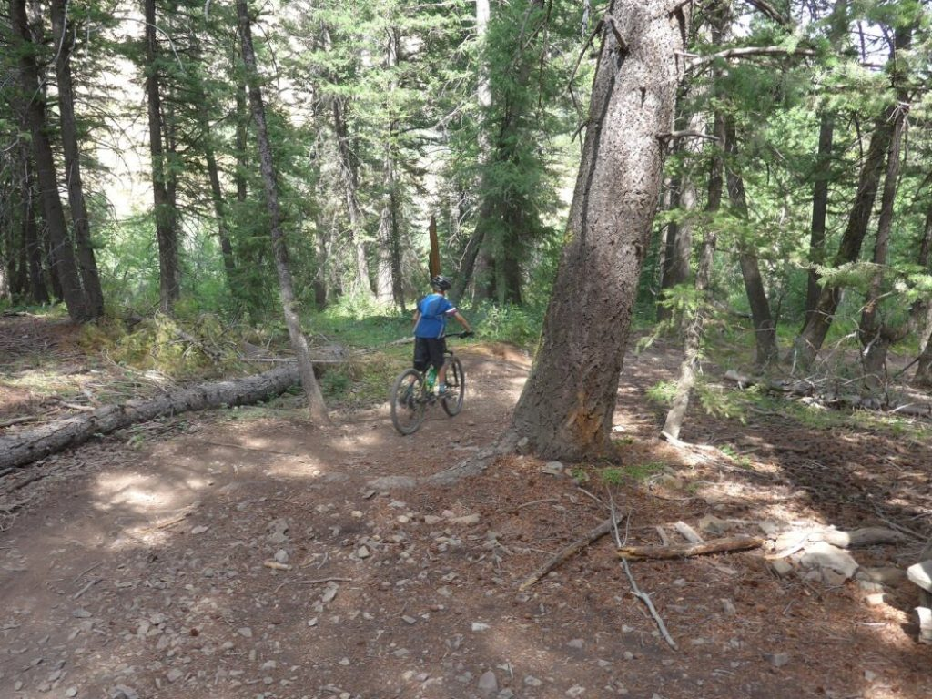 Downhill at the Adams Gulch Trail System Ketchum Idaho