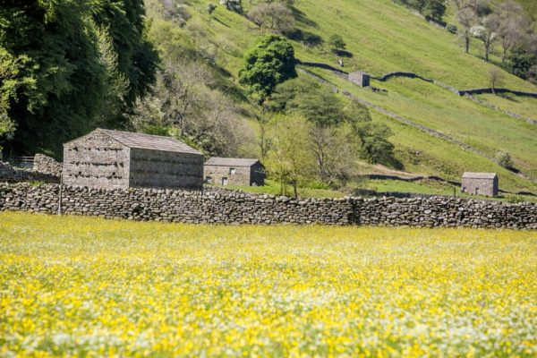 Swaledale meadow nr Swale Trail Family cycling with kids in the Yorkshire Dales near Reeth