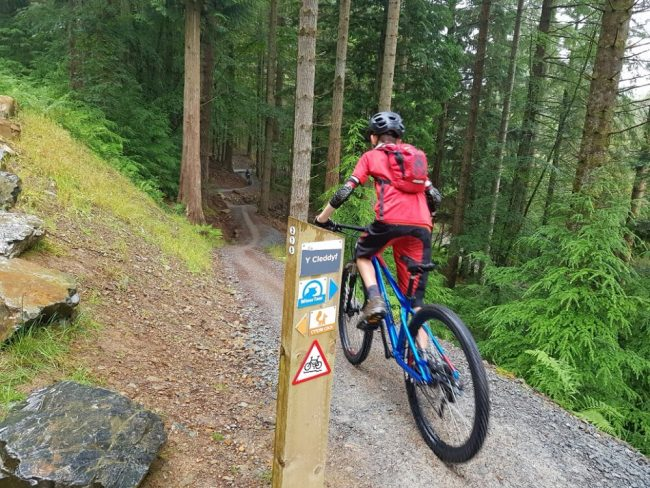 Coed y Brenin Bike Trail Centre North Wales