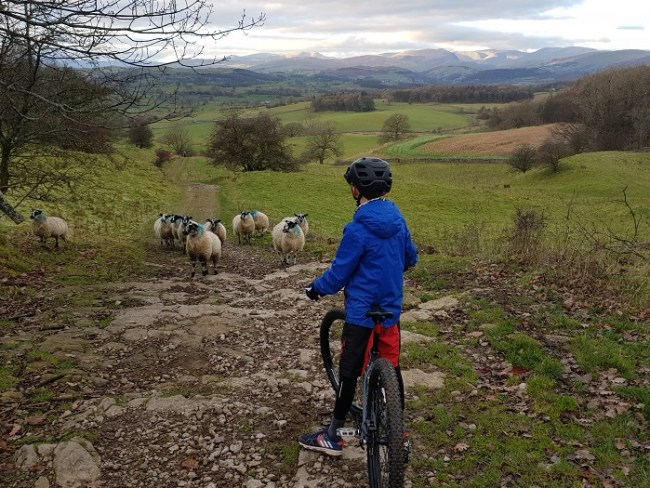 Winter bike ride - sheep on the path