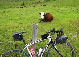 Cow de Joux Plane