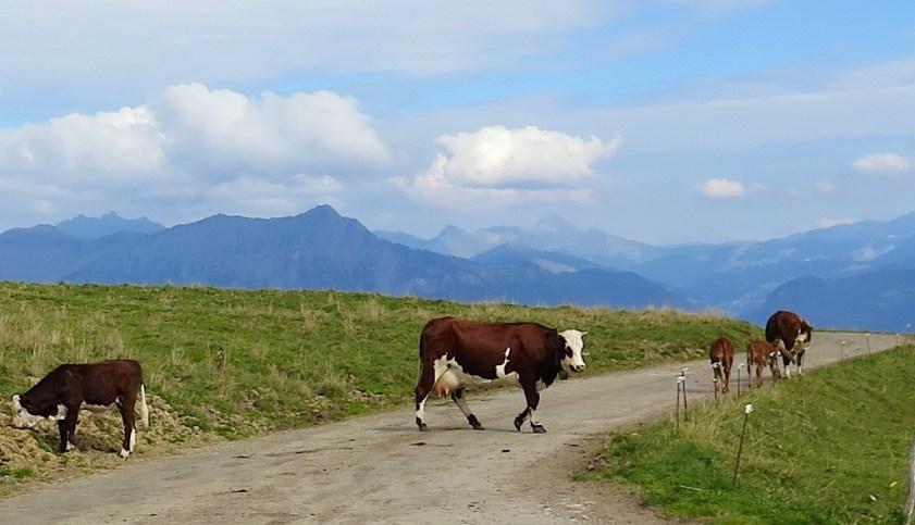 Giving calves distance