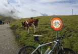 Bikes forbidden on trail to Klein Scheidegg