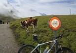 Bikes forbidden on trail to Klein Scheidegg