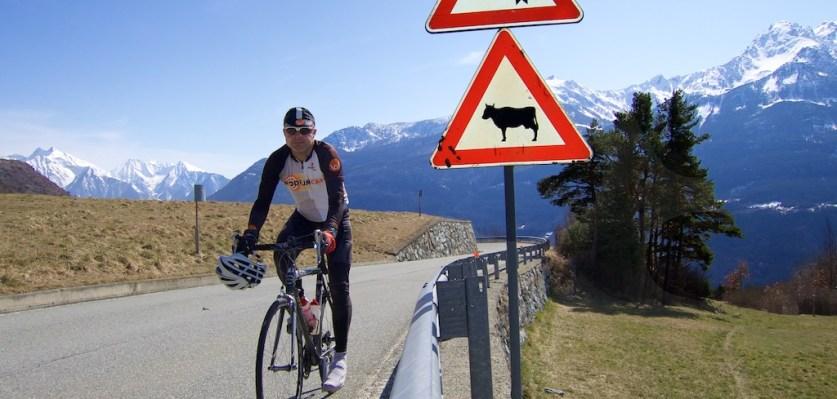 Beware of Cows