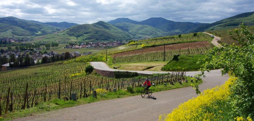 Doreen cycling through hilly Alsace vineyards