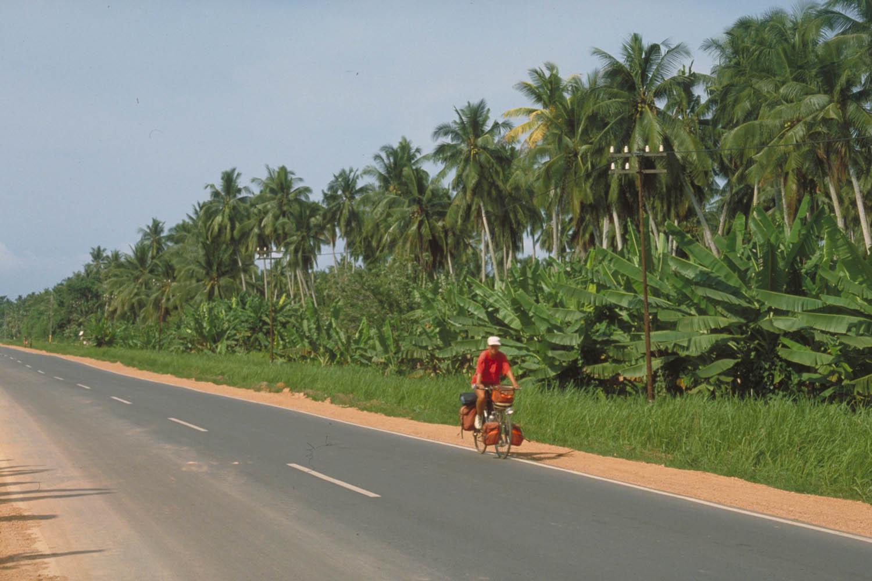 cycling along plantations