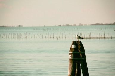 Gabbiano e Laguna