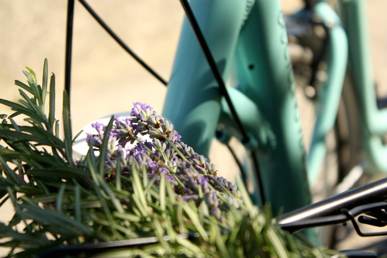 Lavanda & Bike