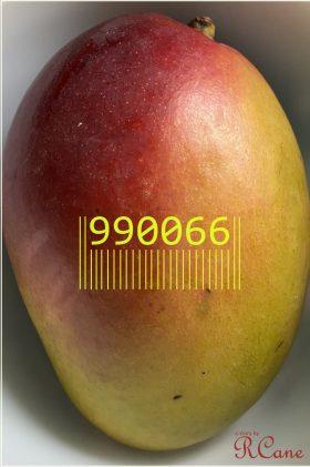 990066