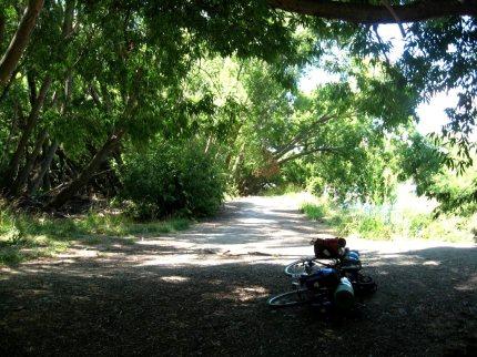 Skogsväg Nya Zeeland