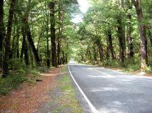 Lövskog Nya Zeeland