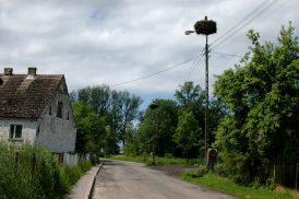 Storkar i Polen
